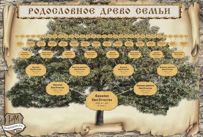 Шаблон генеалогическое древо 310